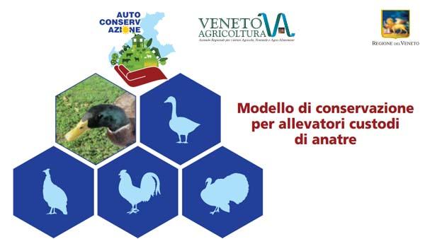 Allevatori custodi di anatre: modello di conservazione