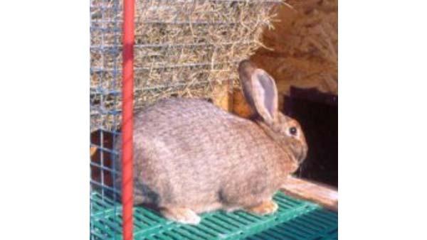 Alimentazione del coniglio e legno pregiato dalle siepi
