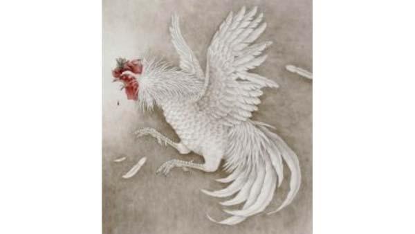 Comportamento dei galli