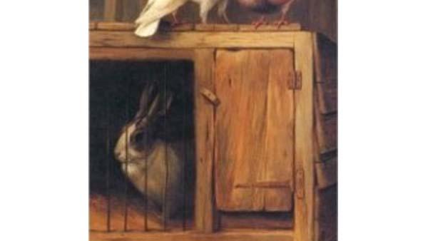 Dimensionare un allevamento di conigli