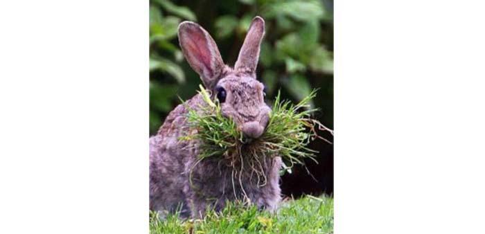 Erbe velenose per i conigli: lista e dettagli