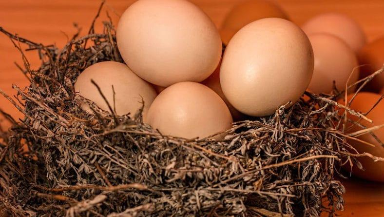 Deposizione delle uova piccole consigli e alcune curiosità