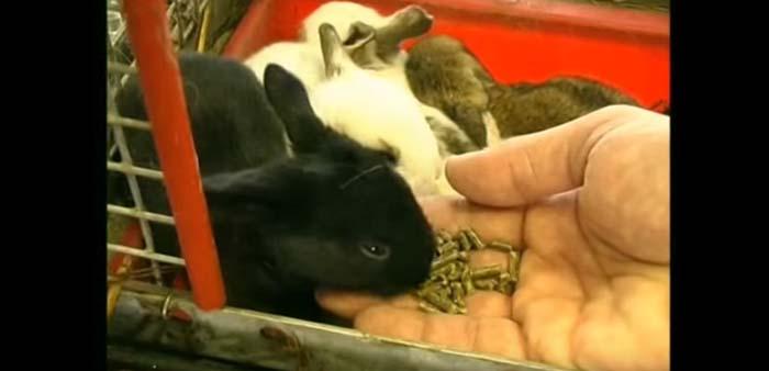 Svezzamento dei coniglietti: attenzione alla prole