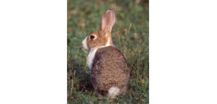 Allevamento conigli in estate: lettiera e aerazione