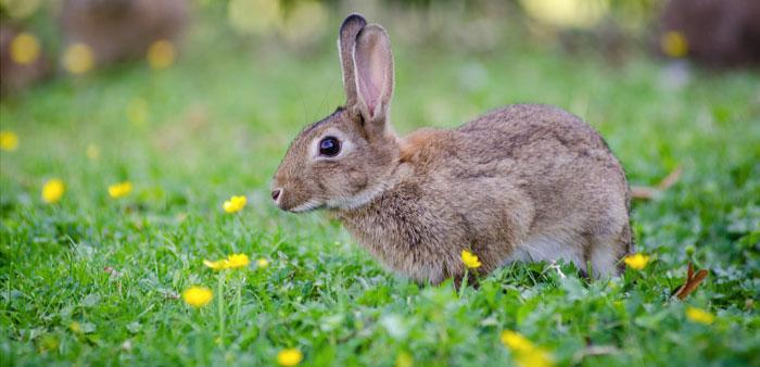 Mangime per conigli in ottobre