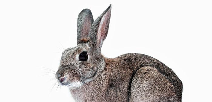 Allevamento del coniglio a luglio