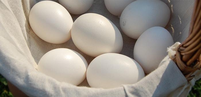Uova a guscio bianco
