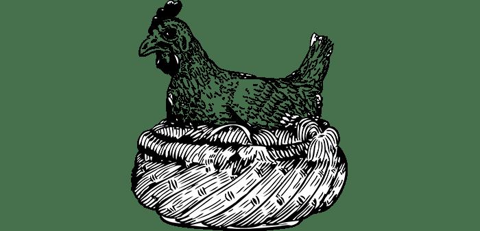 Gestione della lettiera pollaio nel periodo invernale