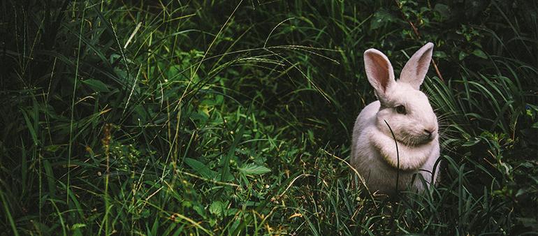 Alimentazione dei conigli allevati con metodo mediterraneo